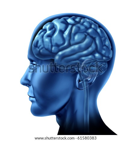 brain lobe sections divisions of mental neurological lobes activity isolated