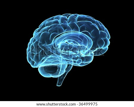 Brain model xray look isolated on black background