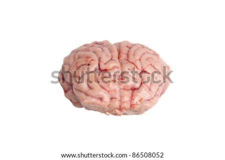 Brain of a black-tailed deer isolated on white