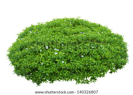 brain shape ornamental tree isolated on white background with clipping path - stock photo