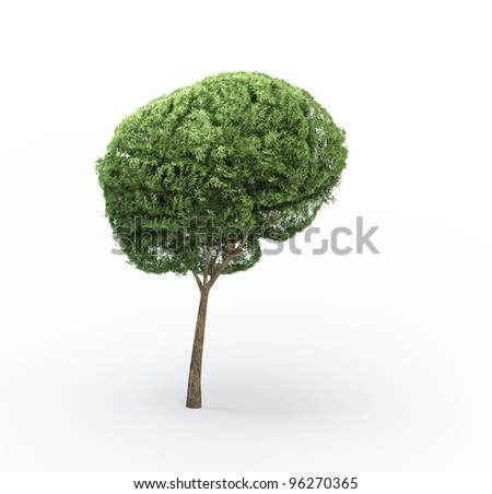 Brain shaped tree