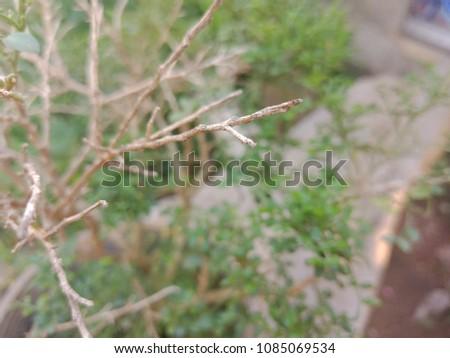 branch branch branch #1085069534