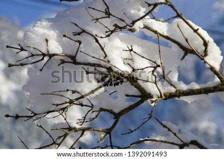 Branch branches close loading snow #1392091493