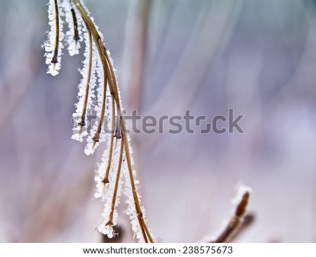 Branch covered with white frost. abstract background