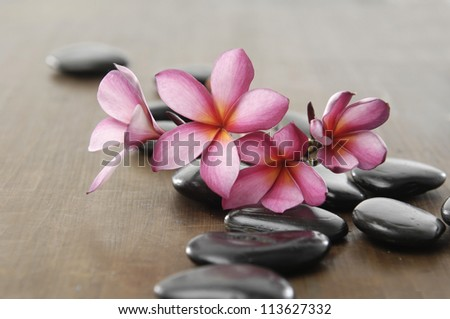 branch frangipani with zen stones on wooden board