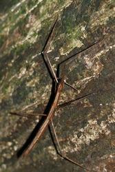 Branch grasshopper on the tree