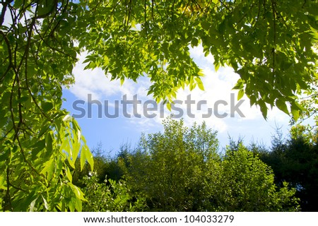 Branch green leafes on branch in sunny day