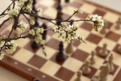 Branch in blossom. Chess board background. Chess pieces. Plum.