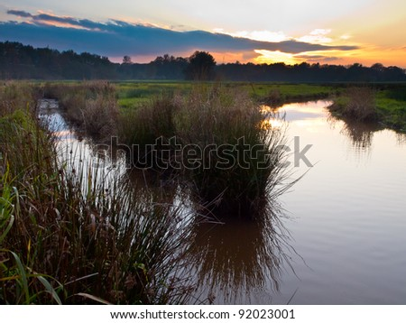 Branch in natural creek in rural setting