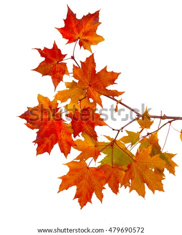 Stock Photo Branch of autumn leaves isolated on white background
