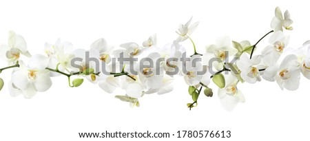 Branch of beautiful orchid on white background. Banner design Сток-фото ©