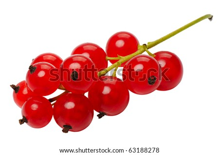 Branch of berries, red currants, isolated on a white background