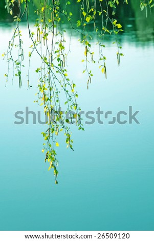 Branch of birch over water. - stock photo