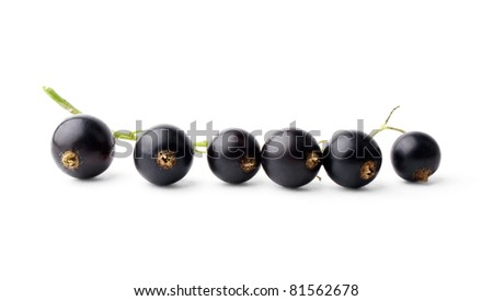Branch of black currant isolated on white background