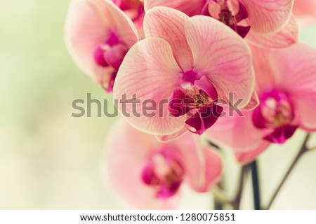 Branch of blooming pink orchid close up