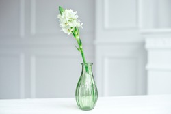 Branch of blooming white hyacinths in a glass vase standing on the table indoor.