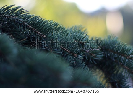 branch of blue spruce #1048767155