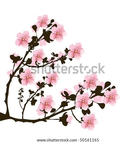 Branch of cherry flowers on white background