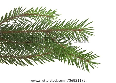branch of Christmas tree isolated on white background #736821193