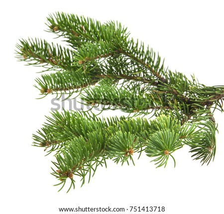 branch of Christmas tree isolated on white background close-up #751413718