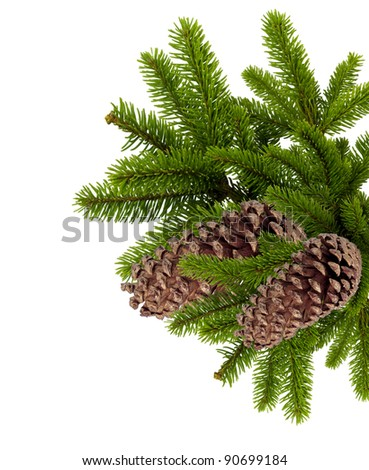 branch of Christmas tree with cones isolated on white