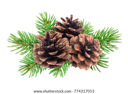 Branch of Christmas tree with pine cones isolated on white background