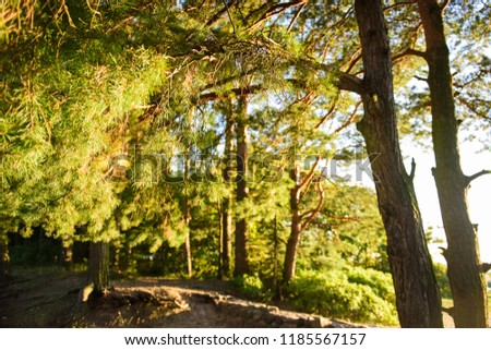 Branch of larch in the sunlight, sunlight through the branches #1185567157