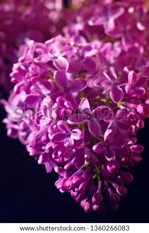 Branch of lilac on dark background with artistic processing. Bright saturated colors #1360266083