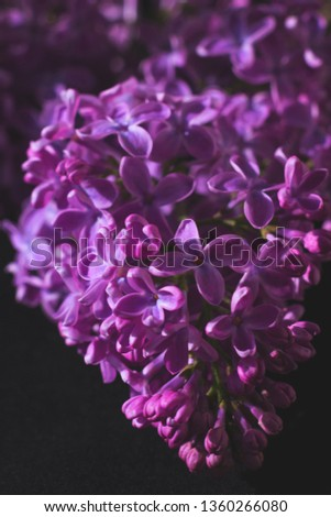 Branch of lilac on dark background with artistic processing. Muted saturated colors #1360266080
