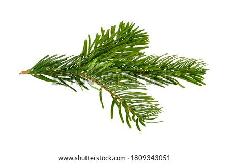 Photo of  Branch of Nordmann Fir Christmas Tree. Green spruce or pine branch with needles. Isolated on white background. Closeup top view.