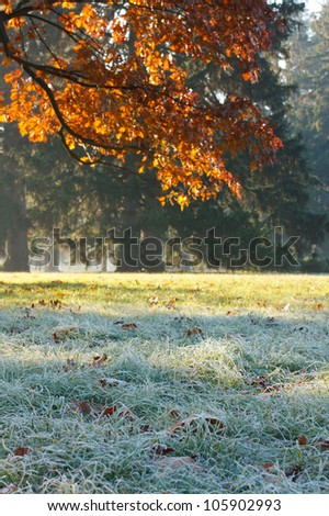 Branch of oak and grass covered with frost. Autumn Landscape. - stock photo