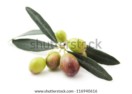 Branch of olive with fruit isolated on white background