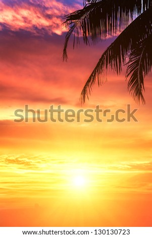 branch of palm trees and a beautiful sunset