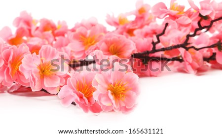 Branch of pink flowers. There is white space for text