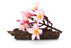 branch of pink frangipani with stacked black wet stones