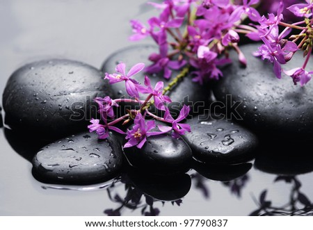 branch of pink orchid with zen stones