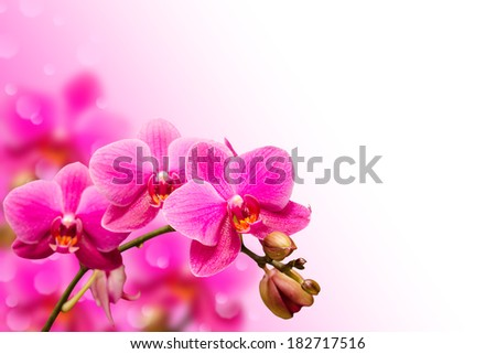 Branch of purple orchid flower on blurred bokeh background with free copyspace place