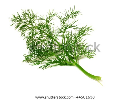 branch of  ripe dill isolated on white background