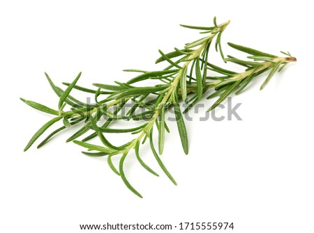 Branch of rosemary on white background.  Stock photo ©
