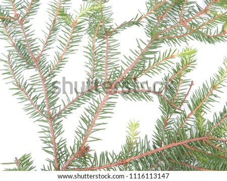 branch of spruce on a white background #1116113147