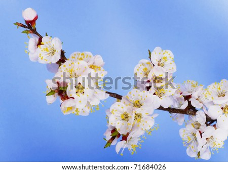 branch of  tree blossoming by pink