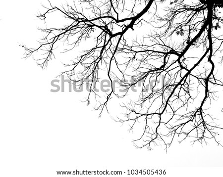 branch of tree silhouette on white background #1034505436