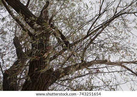 Branch of tree with green and yellow leaves on the background with blue and pink. Early autumn #743251654
