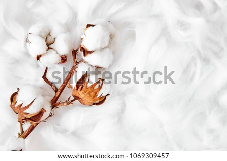 branch of white cotton flowers #1069309457