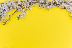 Branch of white flowers on yellow background Spring floral mock up. Minimalistic Spring background with copy space. Flat lay.