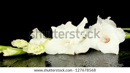 branch of white gladiolus on black background close-up