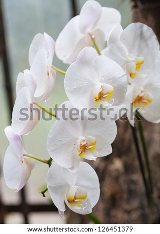 Branch of white orchid on green background.