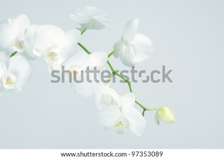 Branch of white orchid on light blue background. Toned image.
