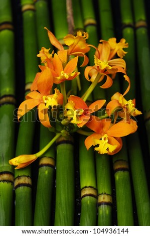 Branch orange orchid on bamboo grove background