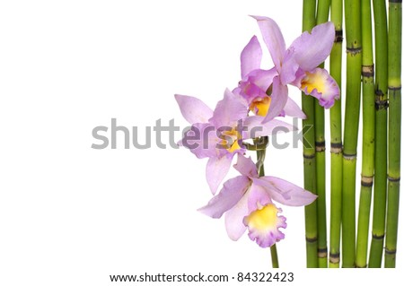 branch orchid and bamboo grove with copy space